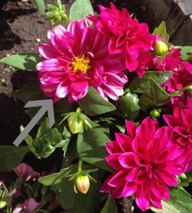 spent_flower