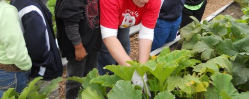 Demonstrating hand pollination to students from Northway School, Fall 2014