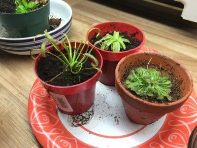 Plant image 1