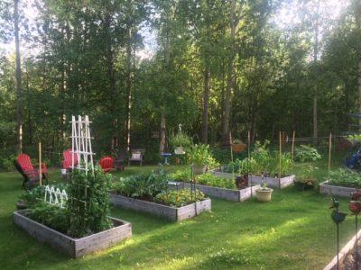 A snapshot of part of my garden!
